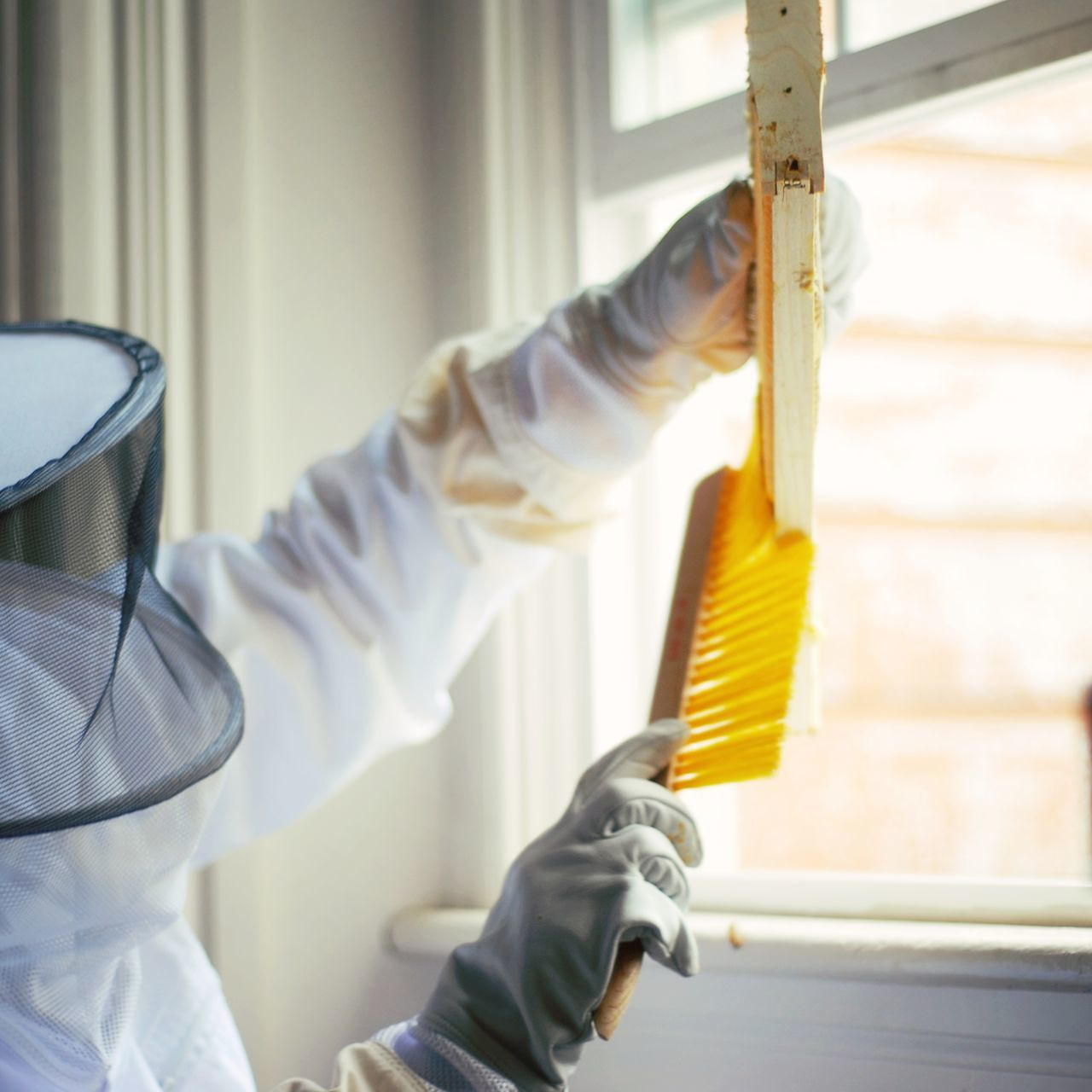 Close-Up Of Beekeeper Cleaning Beehive Against Window