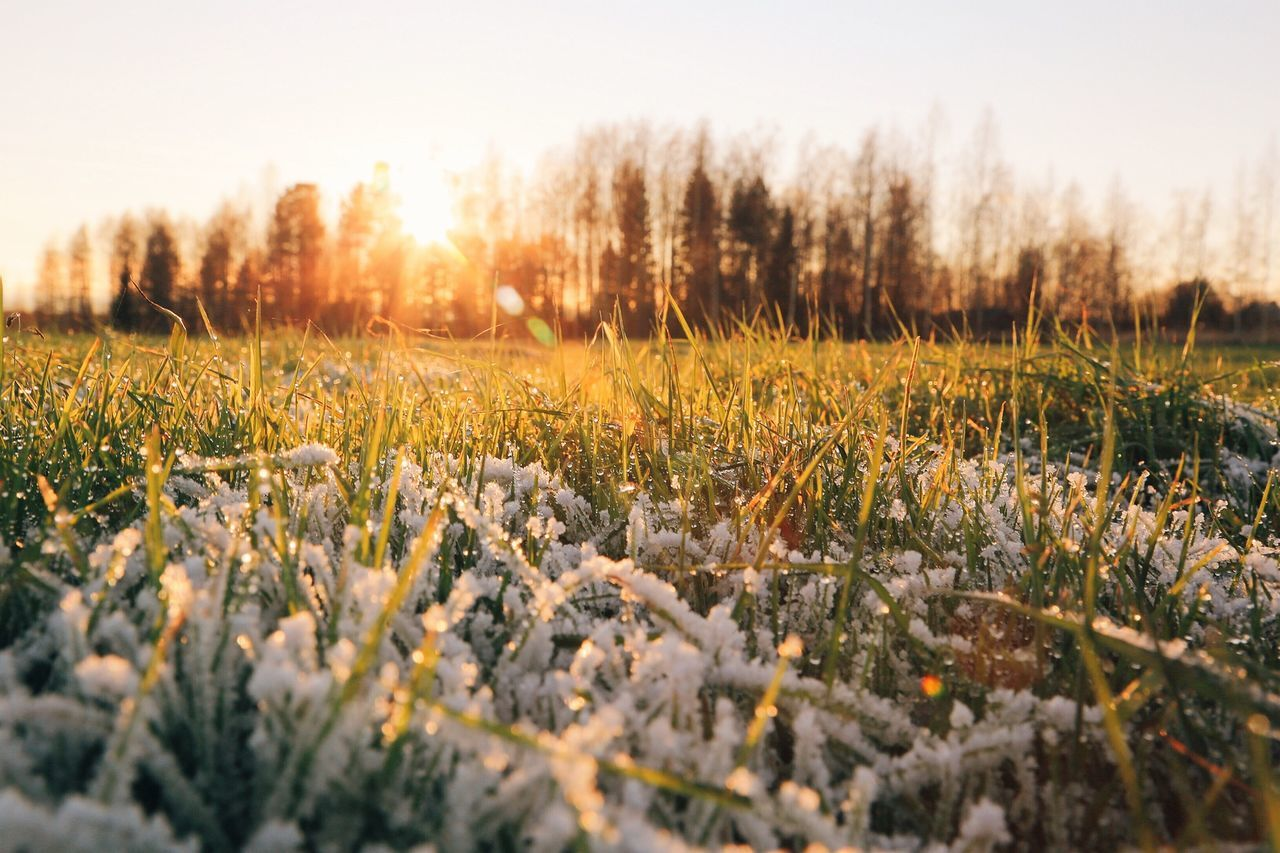 Close-Up Of Frozen Grasses On Field