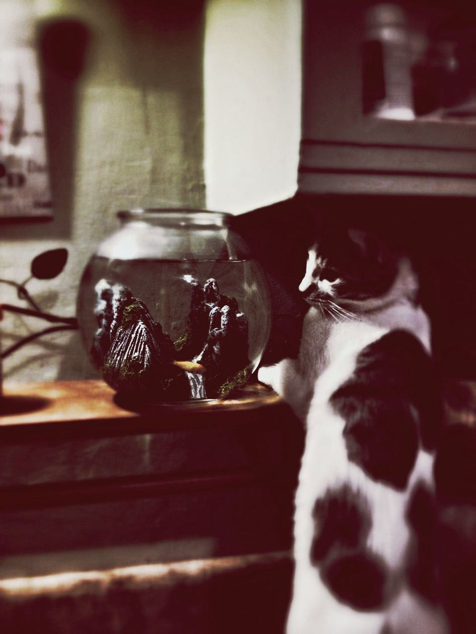 Clara Filter Just a little bite Here Fishy Fishy Cat