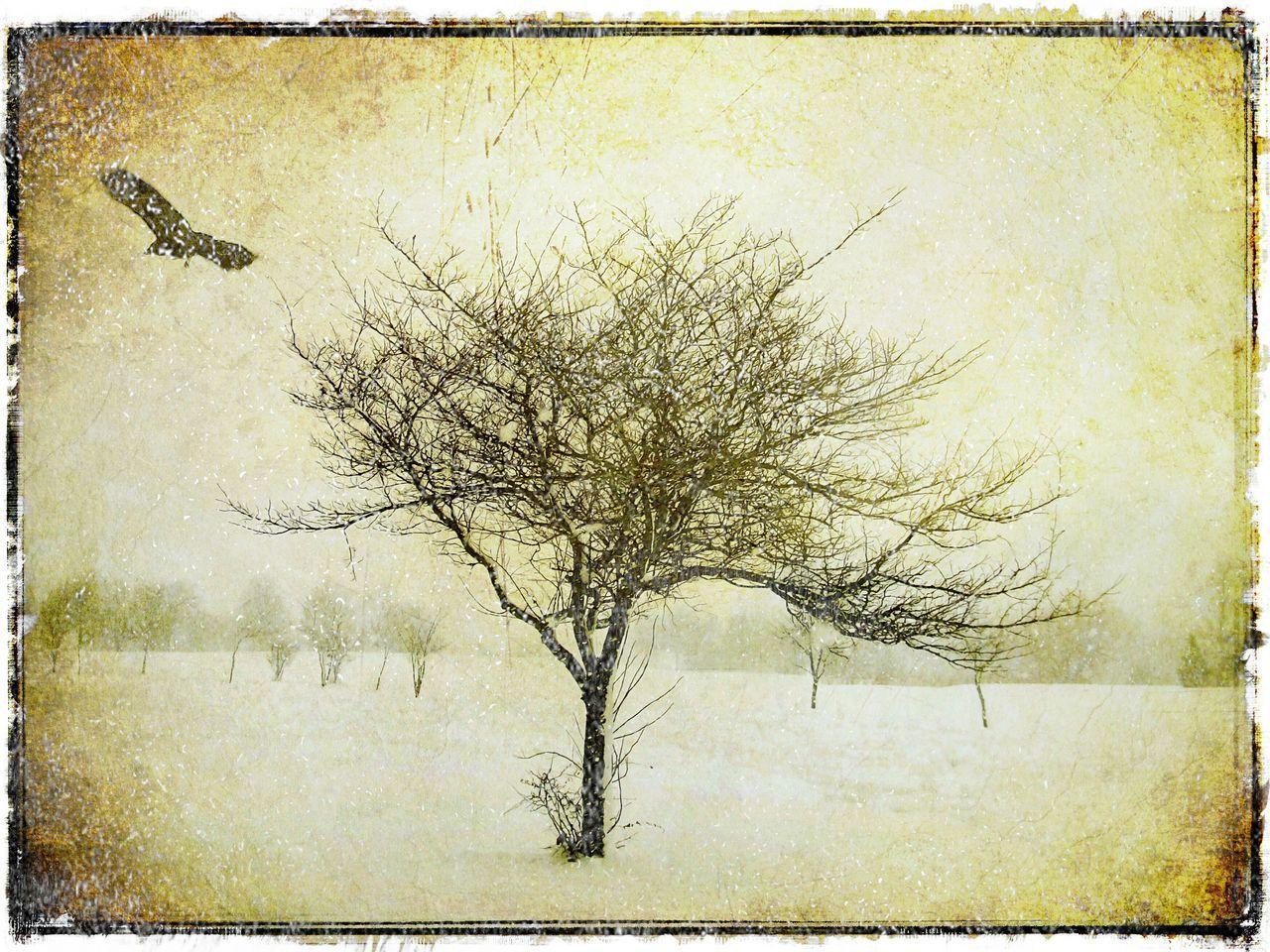 Snow fall in Heston. Snow Snowfall Tree In Snow Winter Trees Snowminimals White Album White Collection Snow ❄ Snowing WhiteCollection