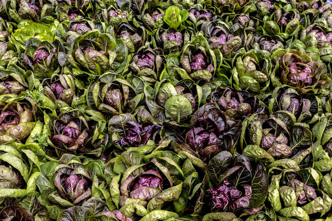 Backgrounds Chioggia Food Freshness Large Group Of Objects Natural Pattern Radicchio Textures And Surfaces Verdura