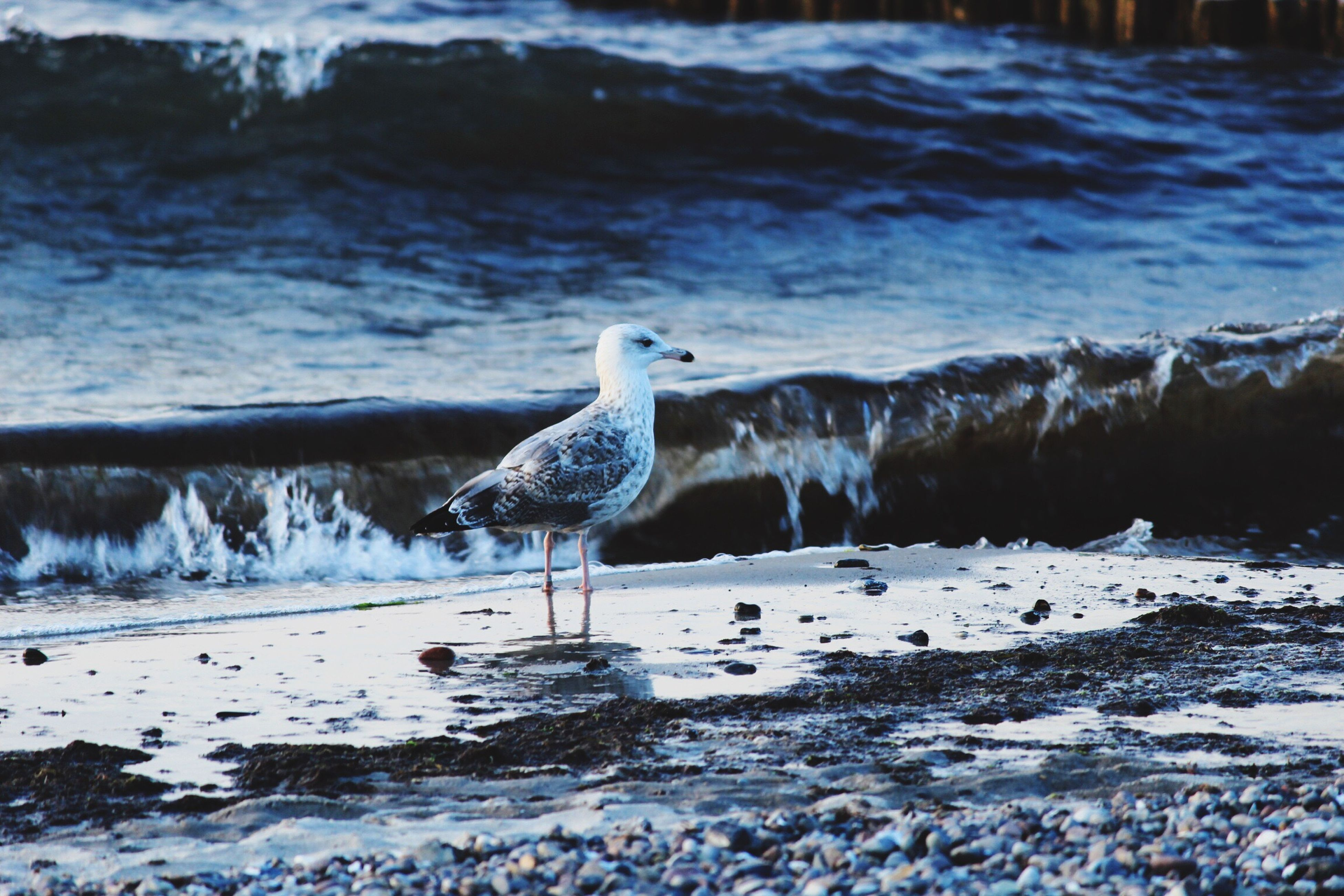 bird, animal themes, animals in the wild, water, wildlife, seagull, one animal, sea, nature, perching, side view, beauty in nature, outdoors, day, focus on foreground, tranquility, spread wings, rock - object, no people, beach