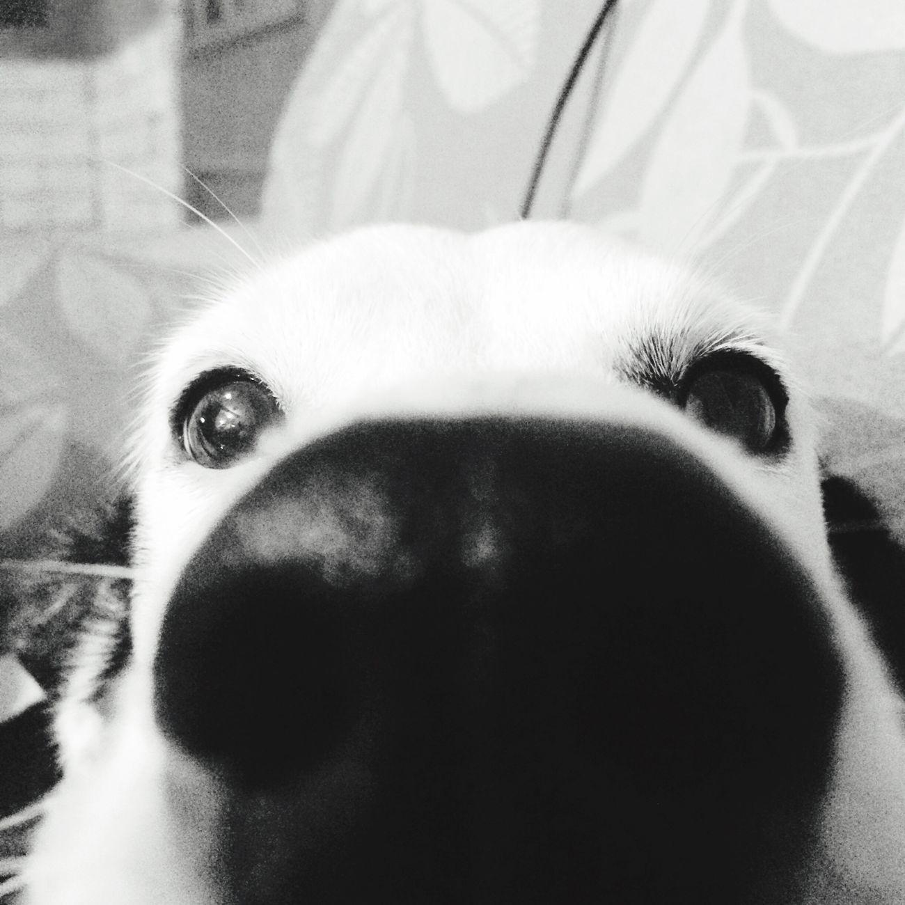 Dog Dog Nouse Animals