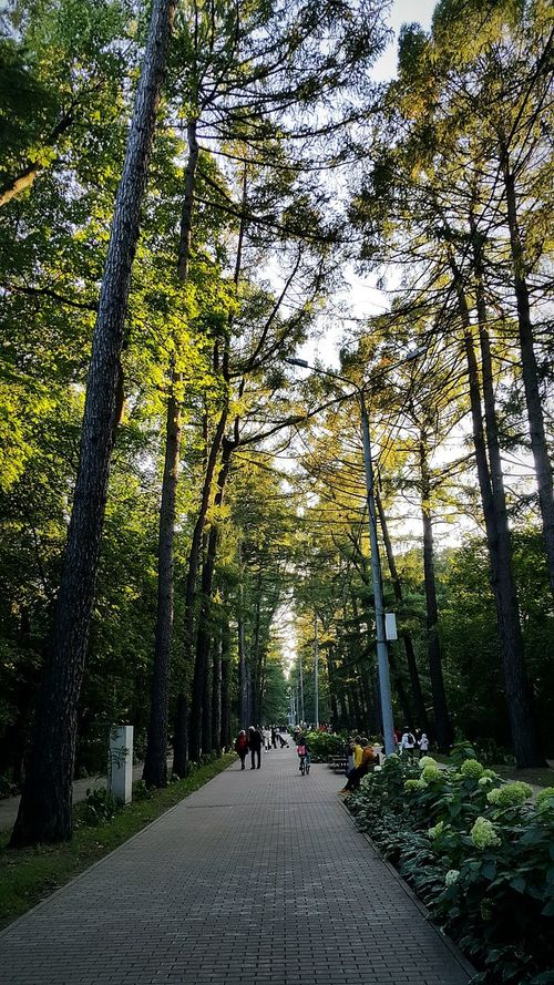 парк лесопарк Лес деревья деревьявлучахсолнца осень ранняяосень сентябрь2017 Park ForestPark Forest Autumn🍁🍁🍁 Earlyautumn September