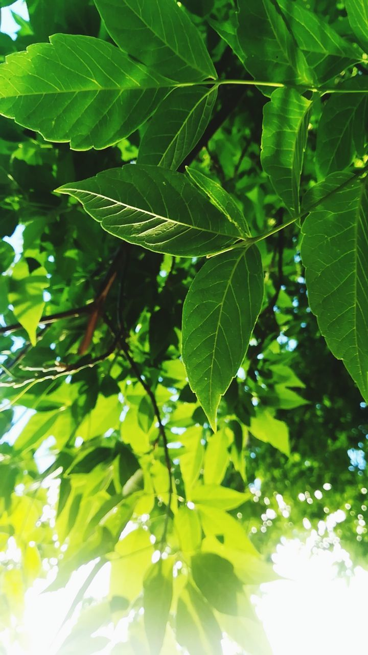 leaf, growth, green color, nature, plant, day, tree, freshness, no people, beauty in nature, outdoors, close-up, fragility