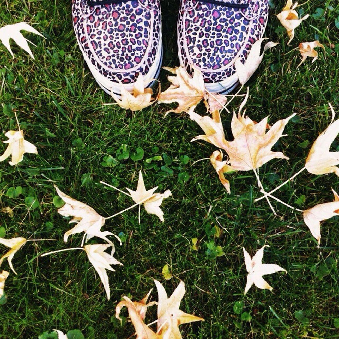 Colours Of Autumn EyeEm Best Shots Floortraits