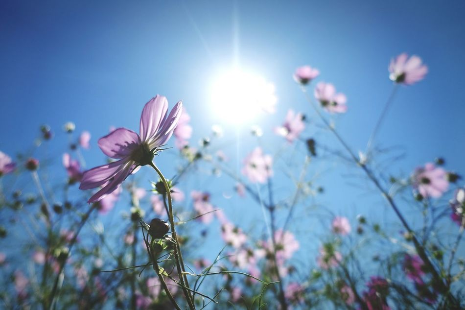 Beautiful stock photos of seoul, Beauty In Nature, Blooming, Day, Flower