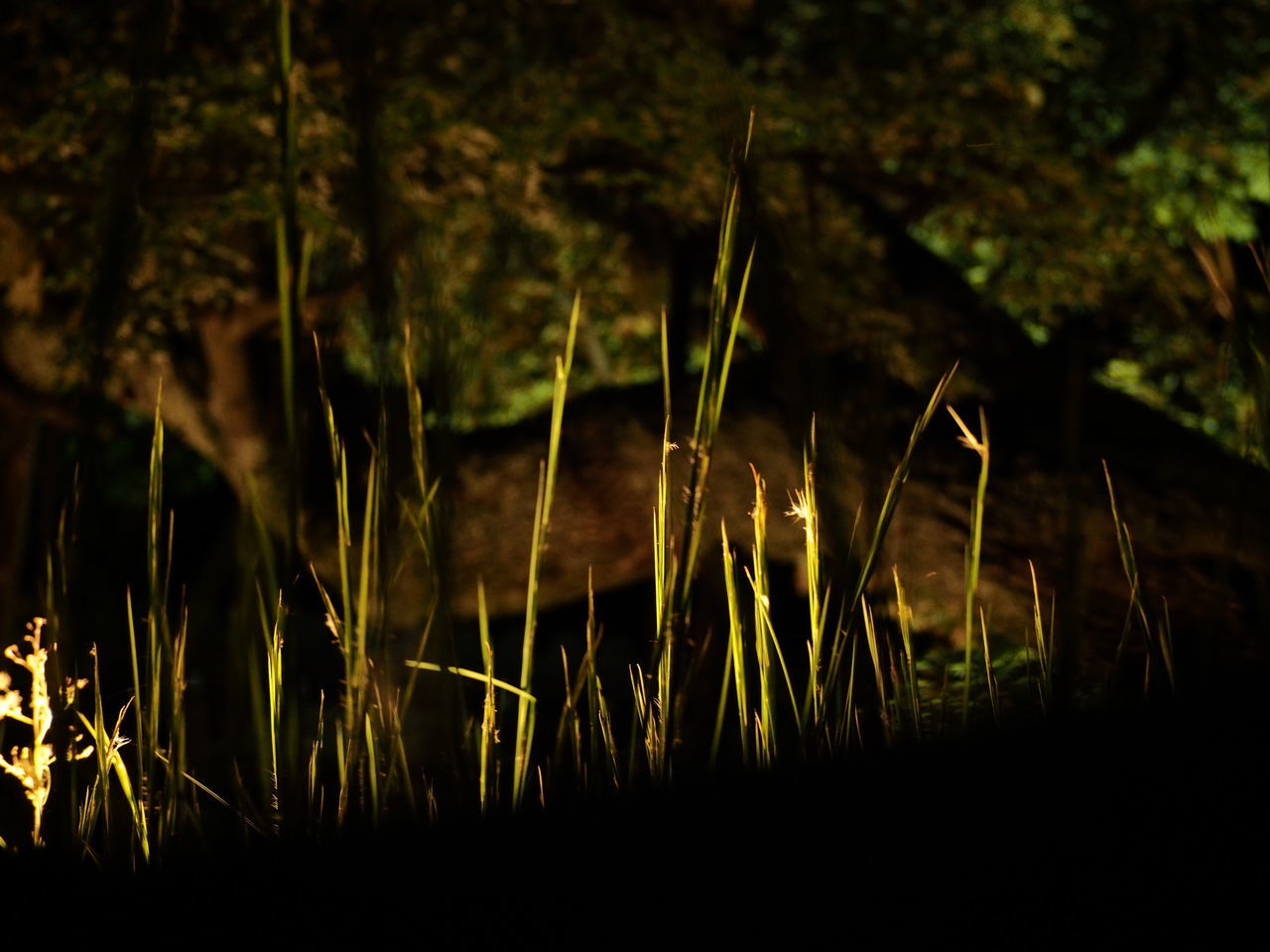 Nature Growth Plant Grass No People Outdoors Beauty In Nature Close-up Day Japan Backgrounds Spotted Low Angle View Night Night Photography Night Lights Night Light Night View Light Nature Tree Kyoto NIght Lights Light And Dark Beauty In Nature Pattern