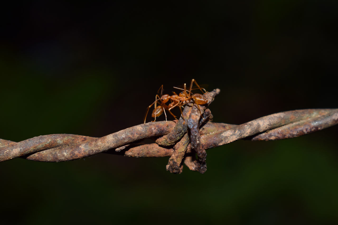 one animal, animals in the wild, animal themes, insect, close-up, no people, nature, animal wildlife, outdoors, branch, day