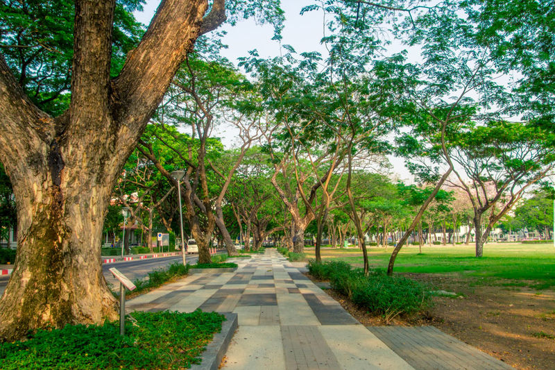 Beauty In Nature Day Diminishing Perspective Footpath Grass Green Color Growth Long Narrow Nature Park Pathway Scenics Sky The Architect - 2016 EyeEm Awards The Essence Of Summer The Great Outdoors - 2016 EyeEm Awards The Way Forward Tranquil Scene Tranquility Tree Tree Trunk Treelined Vanishing Point Walkway
