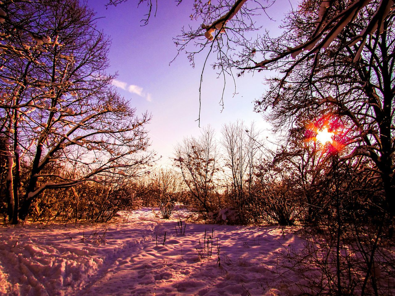 Tree No People Nature Sky Sunset Beauty In Nature Outdoors Streamzoofamily Streamzoo Streamzooers EyeEm Nature Lover Landscape EyeEm Gallery Winter Winterscapes Eyeemphotography Photo Of The Week Snow Winter Landscape Wintersunset Colorful Munich Holidays Holiday Wintertime