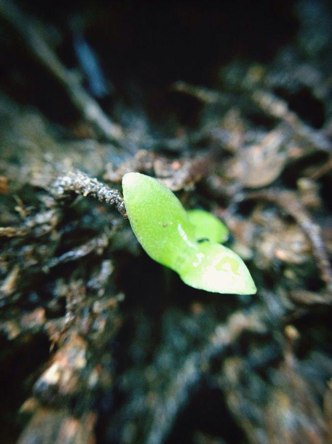 Nature 拈花惹草