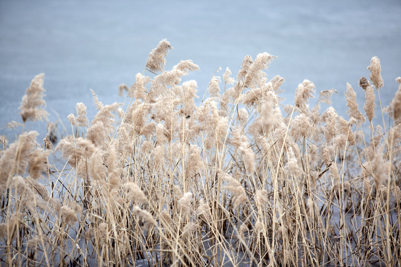 Beautiful stock photos of south korea, Beauty In Nature, Chuncheon, Close-Up, Cold Temperature