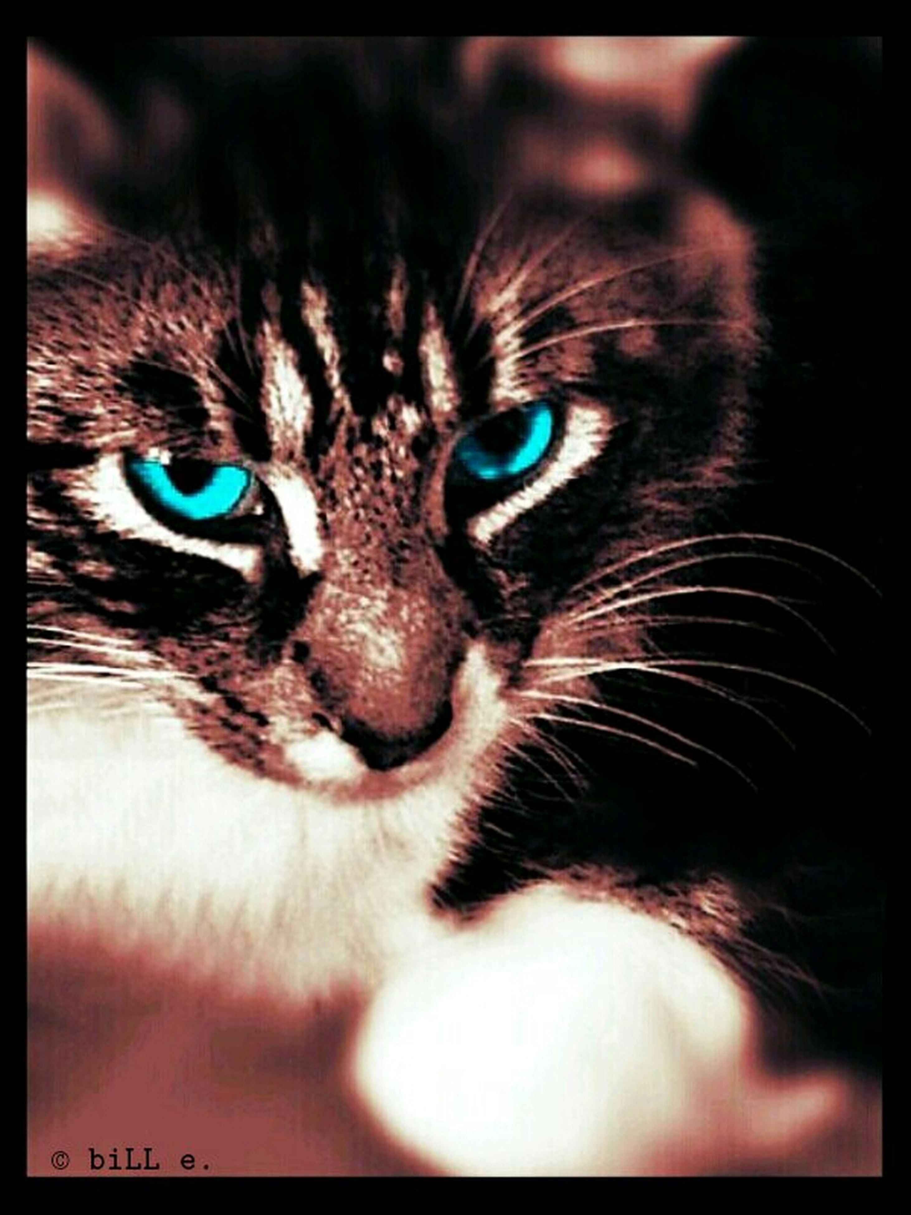 one animal, animal themes, domestic cat, pets, cat, domestic animals, feline, whisker, transfer print, close-up, indoors, animal head, looking at camera, portrait, animal eye, auto post production filter, mammal, staring, alertness, animal body part