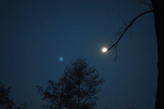 Moonlight Sonata Open Edit OpenEdit Exceptional Photographs Exceptional Photography EyeEm Best Shots - Nature EyeEm Nightscape Eyeem Night Photography Moon Night Nature Outdoors Tree