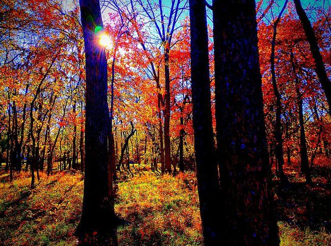 Kansas Autumn Autumn Colors Fall Beauty