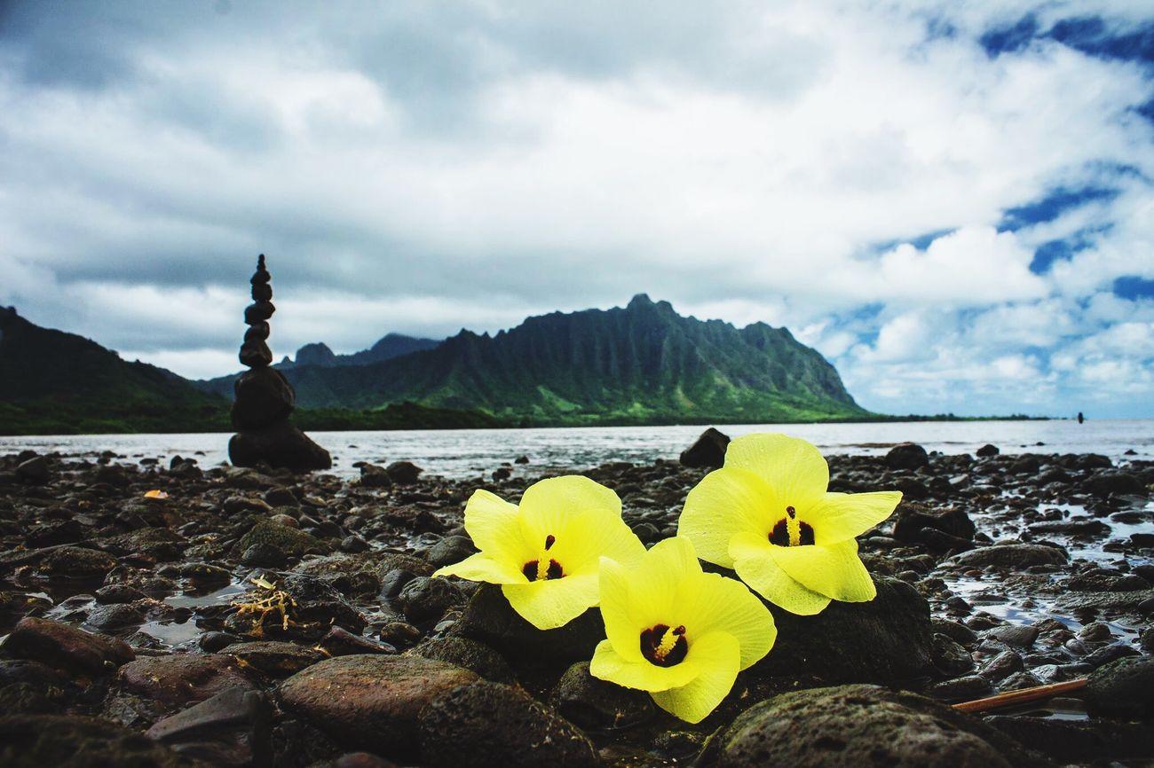 Check This Out Enjoying Life Taking Photos Oahu, Hawaii Waimea Kauai Photography Hawai'i