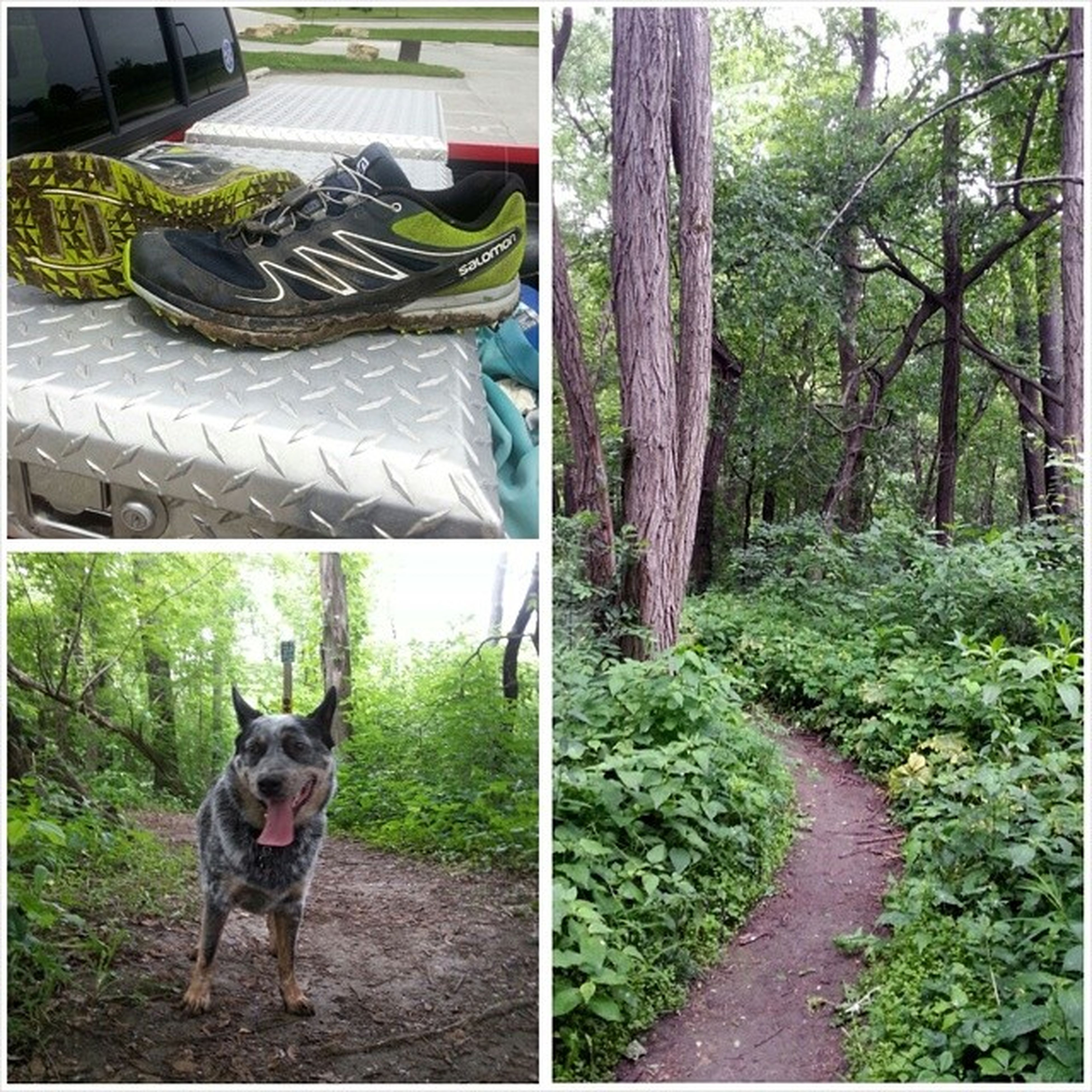 TrailRun  with Oakley at Sunderbruch this morning Trailtails