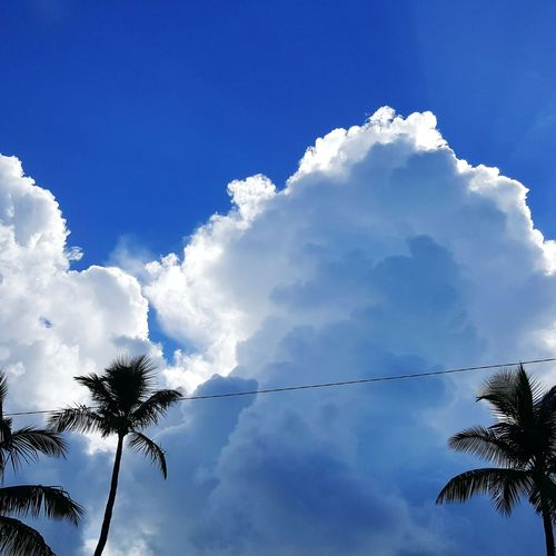 Cloud - Sky Blue Outdoors Palms And Sky Summer No People