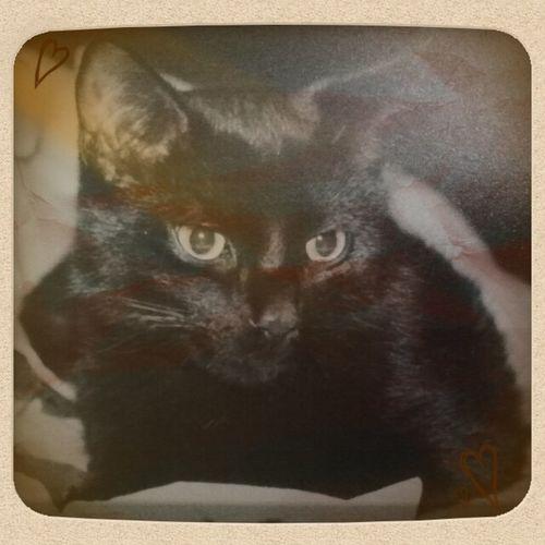 r.i.p. little mozart, beloved cat!! :'( Sepia Cats Love Pets