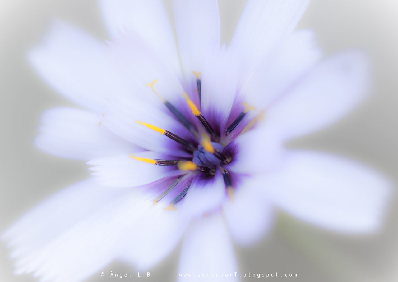 flower, petal, fragility, beauty in nature, freshness, nature, flower head, selective focus, growth, close-up, day, springtime, plant, outdoors, no people, blooming