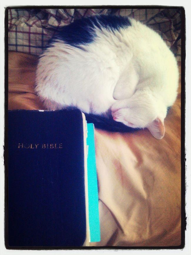Resting on His Word Juicy Cat Lovers