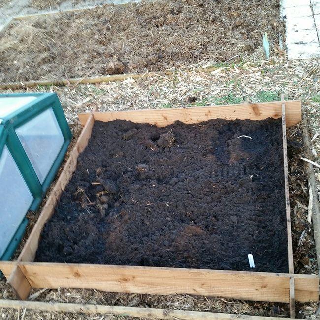 New asparagus bed Asparagus Allotment Raisedbed