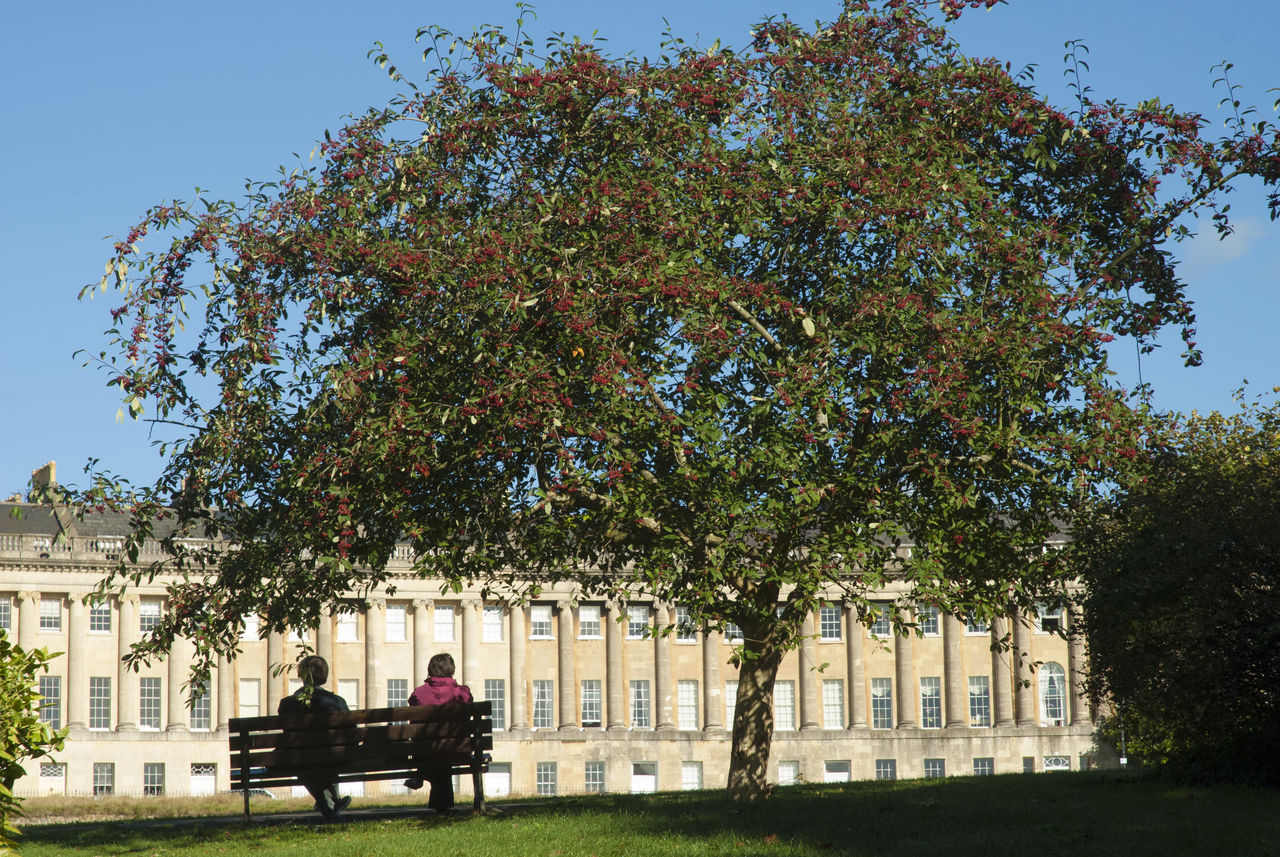 Architecture Bath English City EyeEmNewHere Holiday Destination Red Berries In Tree Sitting On A Bench Tourist Attraction  World Heritage Site