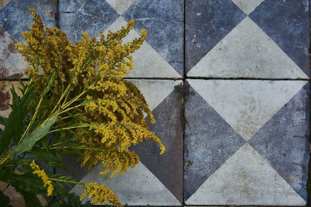 Teufelsberg Architecture Close-up Flagstones Goldenrod Flower Nature No People Solidago Yellow