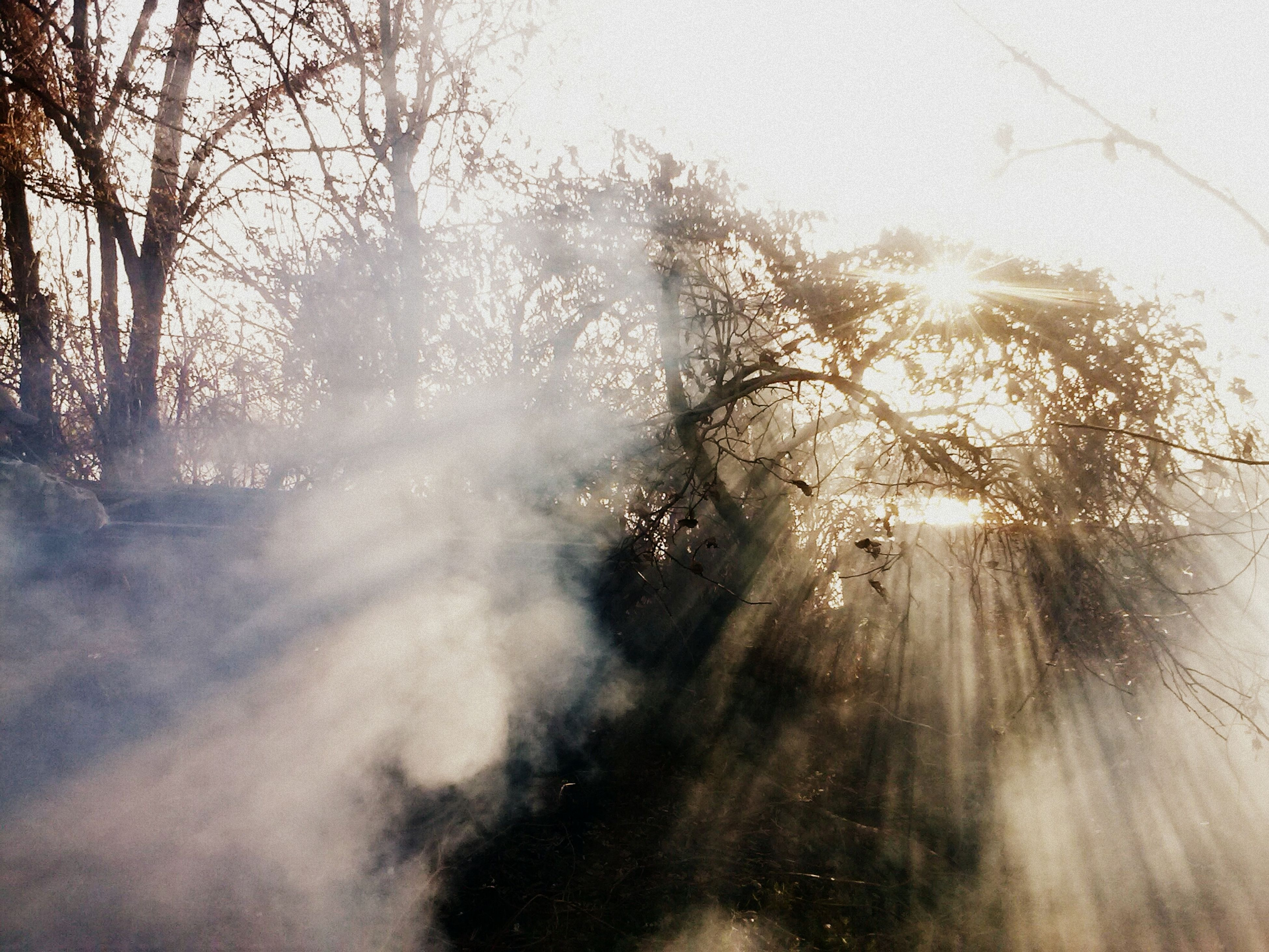sun, tree, sunbeam, sunlight, lens flare, tranquility, tranquil scene, nature, beauty in nature, silhouette, scenics, bright, back lit, fog, branch, forest, growth, sky, sunny, weather