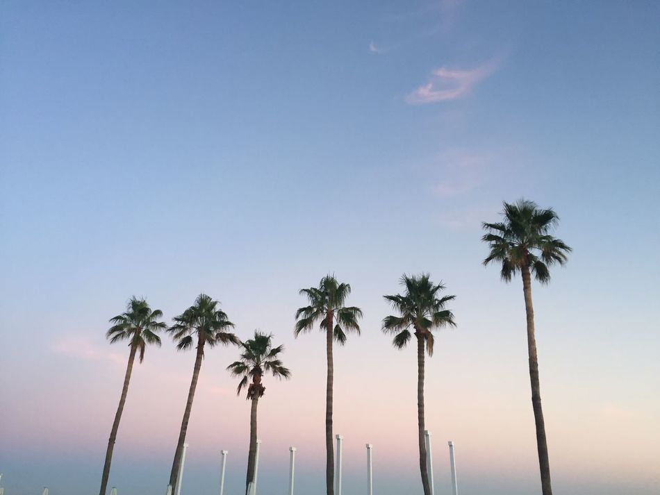 Beach Beach Life Beachphotography Clear Sky La Landscape Landscape_Collection Los Cabos Los Ángeles Low Angle View Nature Nature Palm Palm Tree Plant Santa Monica Summer Sunrise Travel Tree Tree Tropical Climate