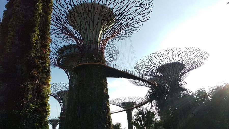 Sky trees travel in singapore Taking Photos Buliding Enjoying Life Travel With Me From My Point Of View Singapore Sky Trees Things I Like