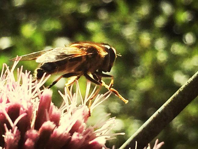 Catch à Bee //bzzz! Nature Mldart