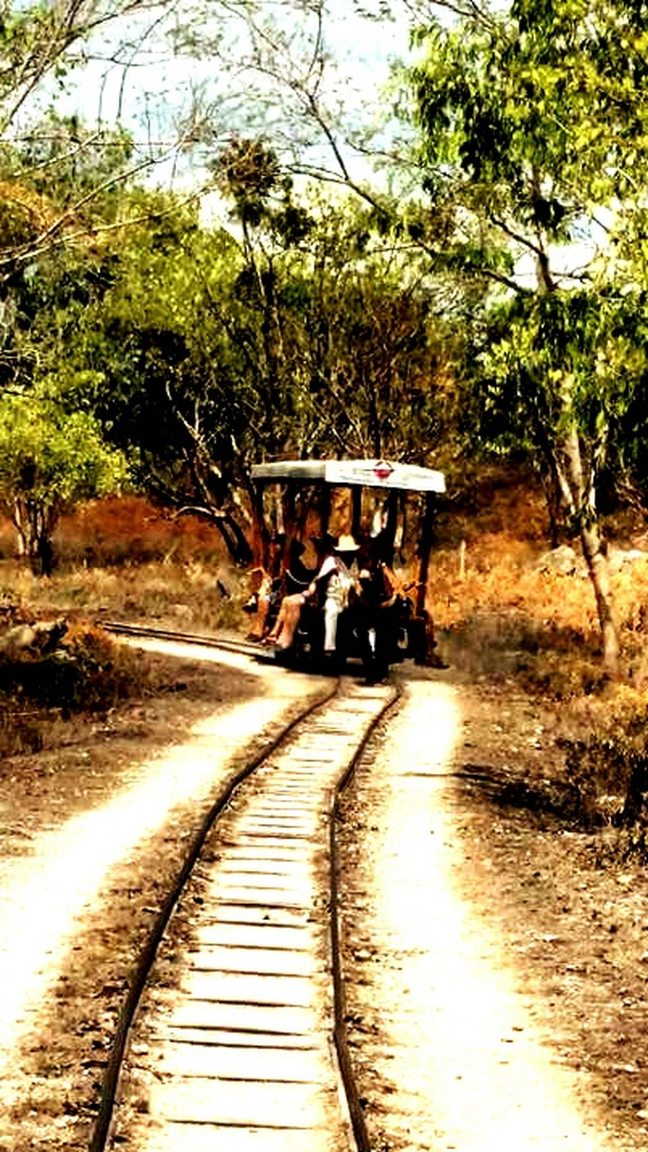 Transportation Mode Of Transport Tree Real People Nature Railroad Track Donkey Rides Yucatan Mexico
