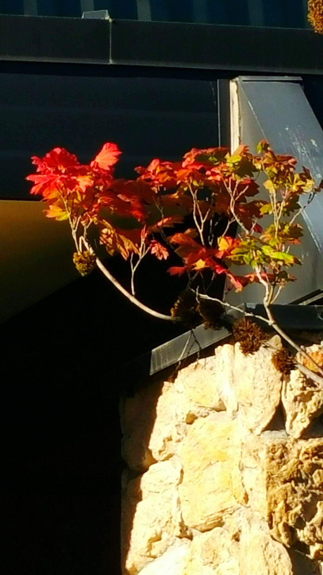 Beautiful Nature Autumn🍁🍁🍁 Fall Colors Colors Of Autumn Autumn Colors Leaves Are Falling Autumn Leaves Fall Is Coming! Fall Leaves Nature_collection