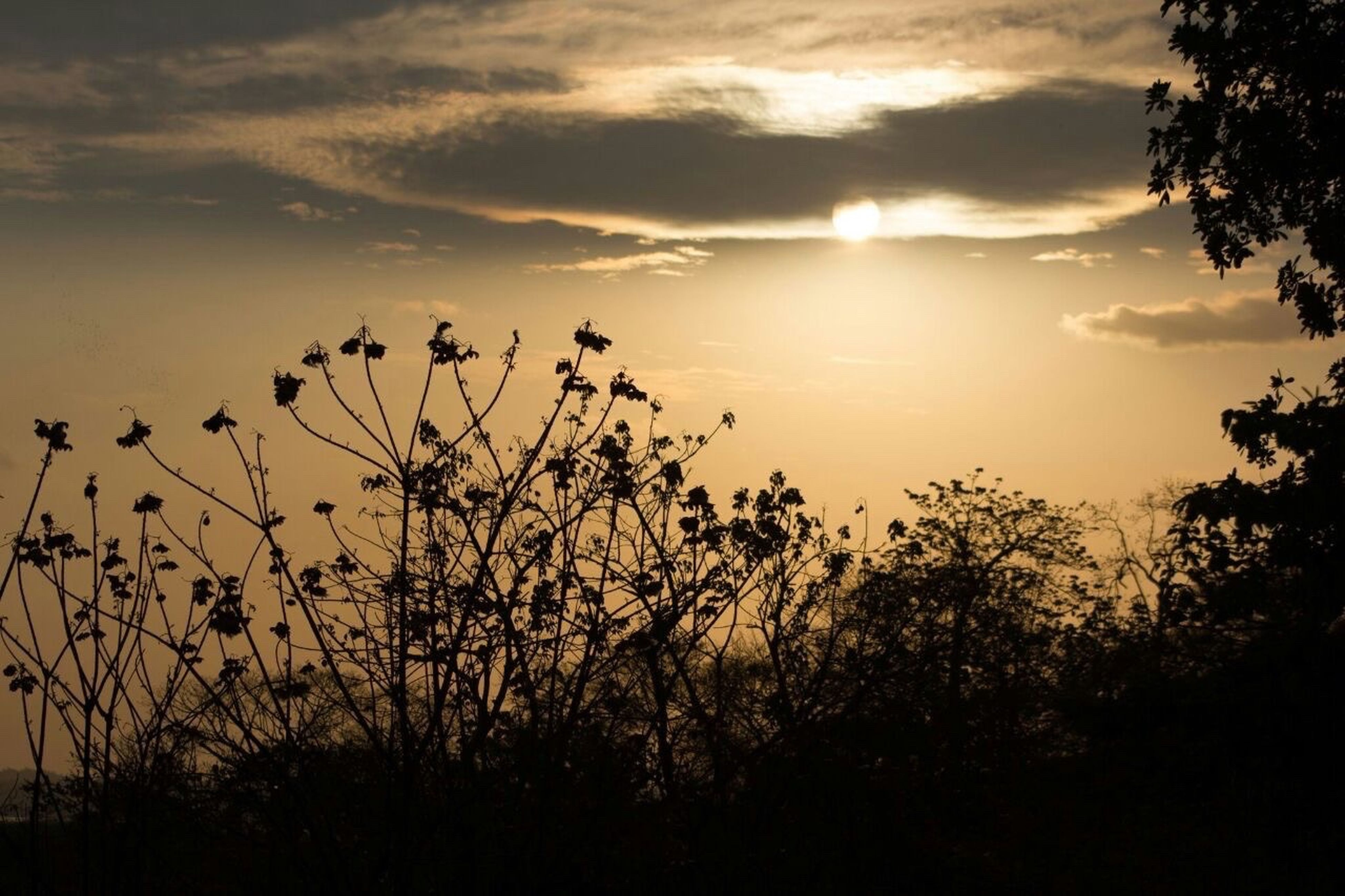 sunset, nature, sun, growth, silhouette, beauty in nature, plant, tranquility, sunlight, sky, outdoors, tranquil scene, no people, scenics, tree, day