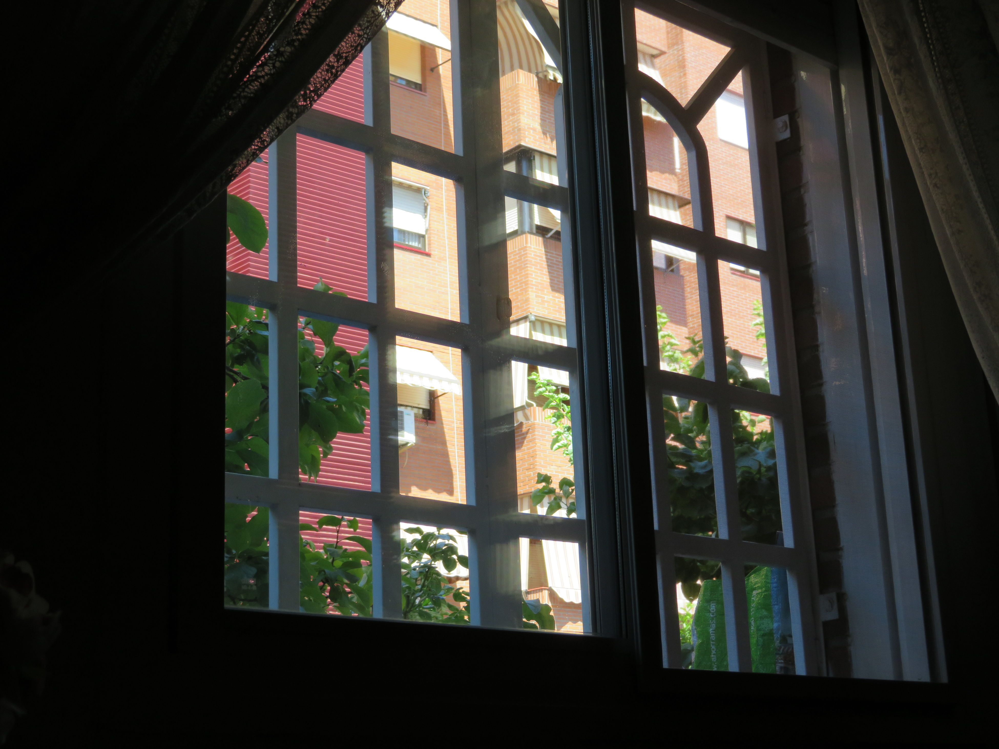 window, indoors, glass - material, day, no people, architecture, built structure, curtain, tree, close-up