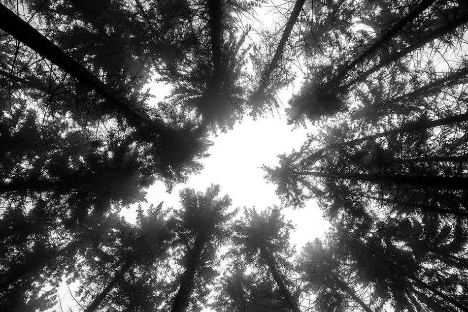 We're all just little specks... Tree Nature Low Angle View Growth Beauty In Nature Forest No People Branch Scenics Day Outdoors Hungary Bükk National Park Bükk Bükk Nationalpark Hungary Magyarország Miskolc Looking Up Tunnel Vision Travel Traveling Travel Destinations Nature Nature_collection Naturelovers