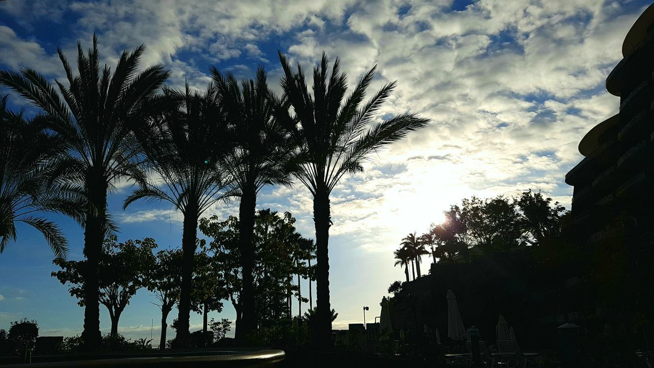 Cloud - Sky Sky Silhouette Palm Tree Outdoors Eye4photography  Taking Photos Nature_collection EyeEm Best Shots EyeEm Nature Lover Light And Shadow Shadows & Lights Shadow PalmsTrees