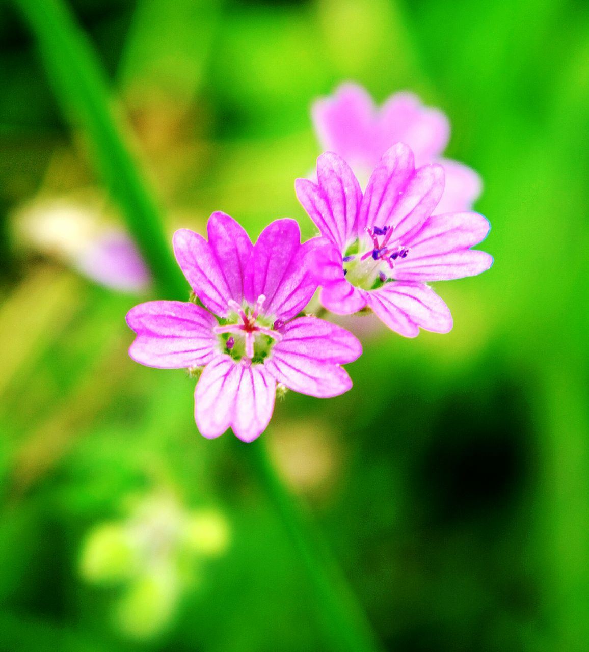 flower, nature, growth, plant, blooming, petal, no people, beauty in nature, fragility, flower head, freshness, outdoors, close-up, day