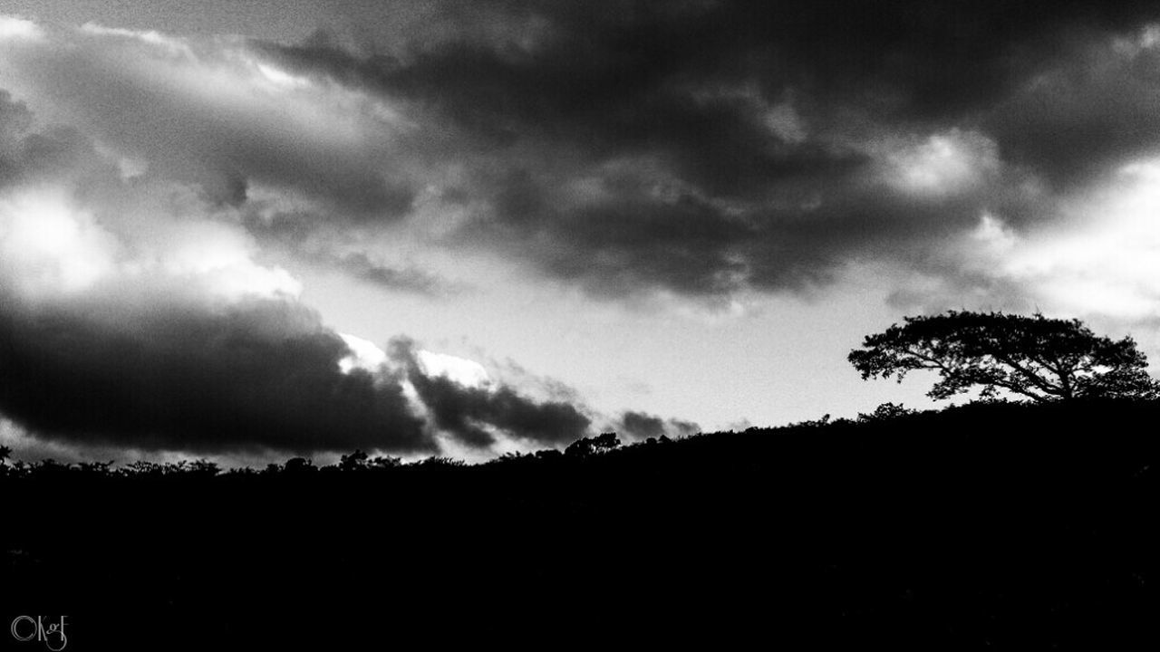 Bodmin Moor Cornwall Countryside Moorland Trees Contrast Black And White Silhouette Sky Sky And Clouds