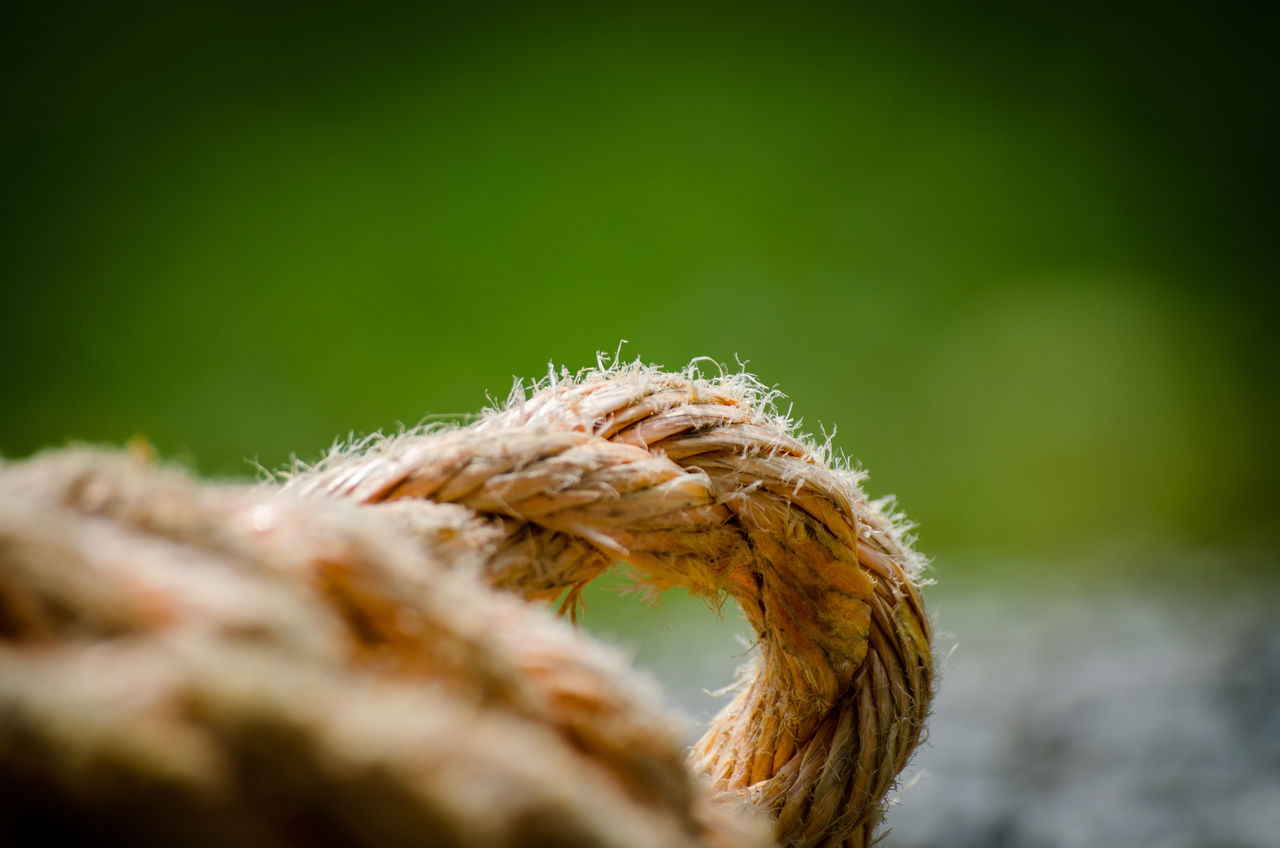 Knot. Beautiful Close-up Day Daytime DSLR Farm Focus On Foreground Fuzzy Green Green Color Hairy  Knot Macro Nikon Nikonphotography Orange Outdoors Photography Rope Rugged Selective Focus Sunny Tie Work Yellow