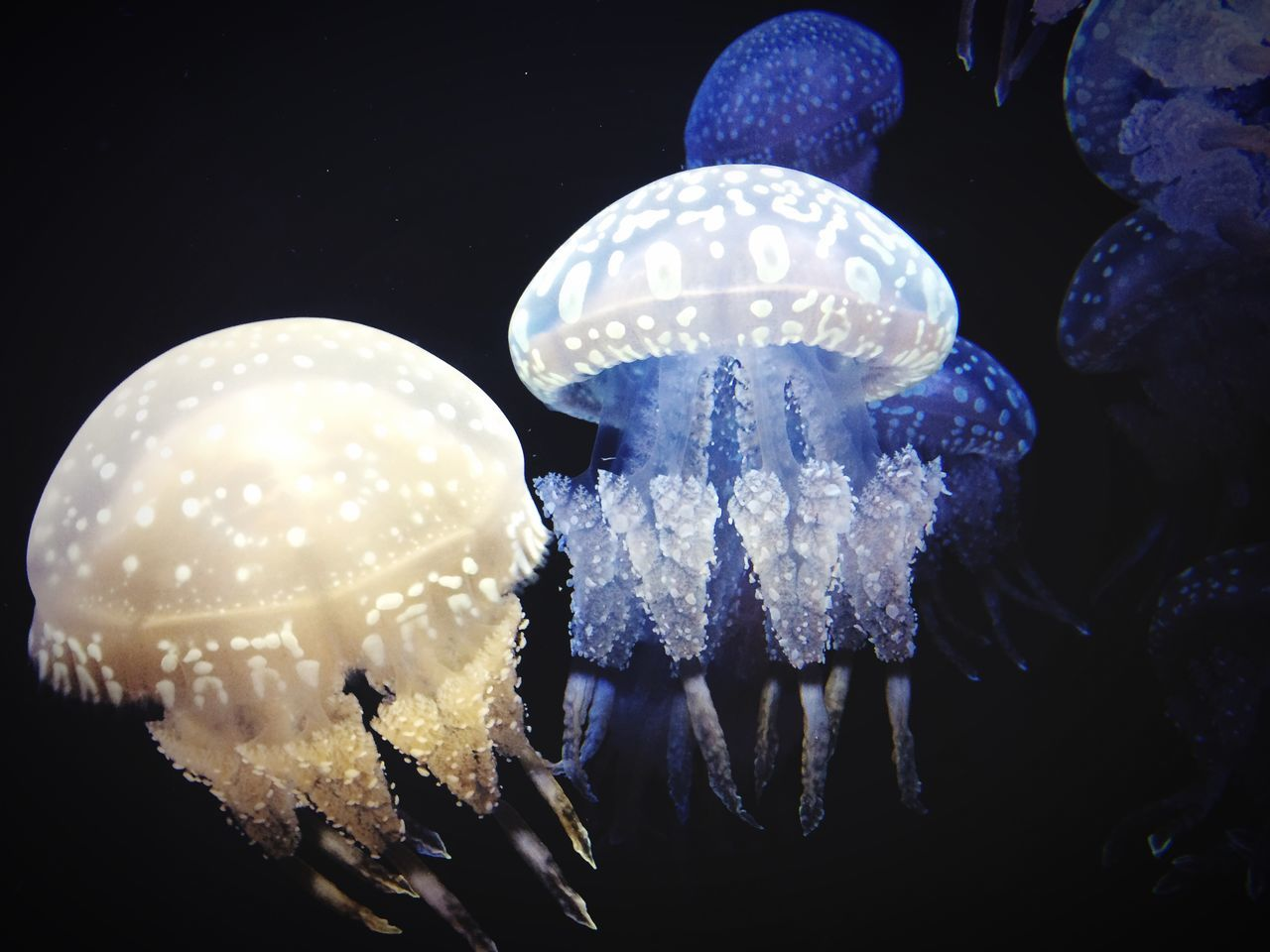 Jellyfish Swimming In Sea
