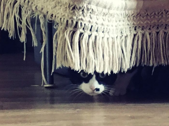 Taking Photos Hello World Relaxing Cat!!!!*-* First Eyeem Photo