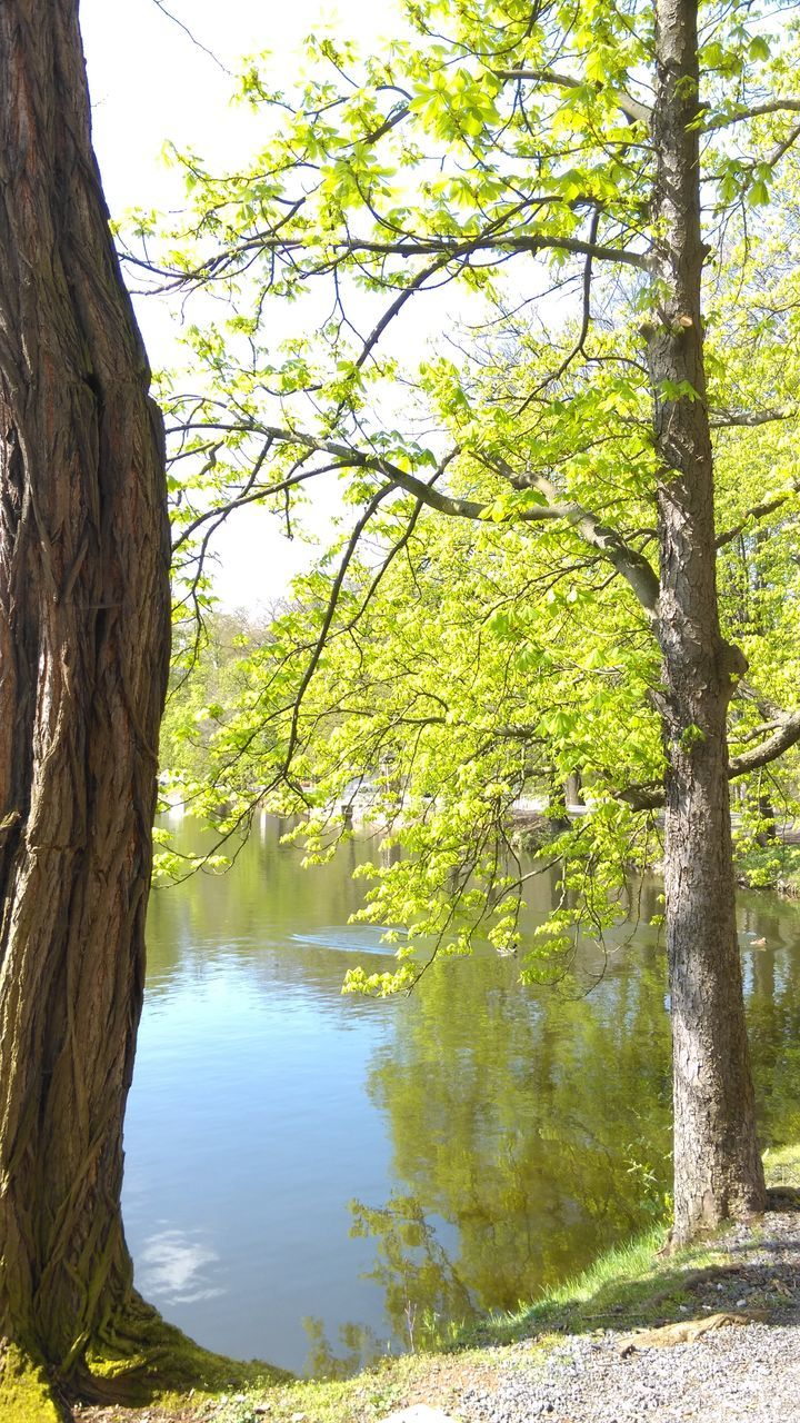 tree, tranquility, nature, beauty in nature, growth, tranquil scene, branch, day, no people, water, outdoors, tree trunk, scenics, lake, sky