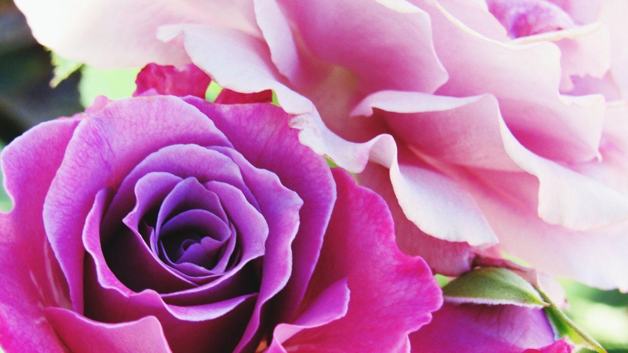 IMYE Takeawalkwithme Loudthougts Purple Flowers EyeEm Best Shots Eyemphotography Eyeemroses Eyeem Photography NoEditNoFilter