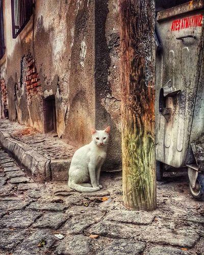 Ateş atmıyoruz gençler... Cat Igcats Catsofinstagram Catstagram Pet Street Animal Nature Landscape Photooftheday IGDaily Igaddict Igers View Instagood Instamood Instadaily Petsofinstagram