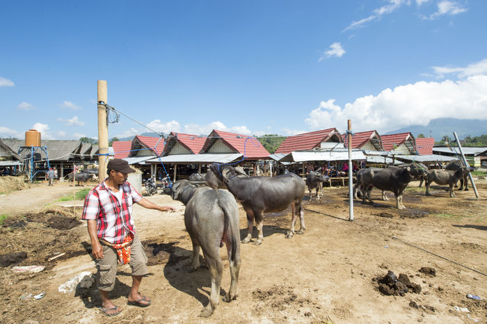 Buffalo Market or popular name Pasar Bolu in Rantepao, North Toraja, Indonesia. Adult Agriculture Buffalo Cloud - Sky Day Dog Domestic Animals Donkey Full Length Goat Horizontal Kid Goat Livestock Mammal Occupation One Animal Only Men Outdoors People Person Pets Sheep Sky Togetherness Working Animal