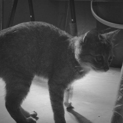 Meet raccoon. Cat