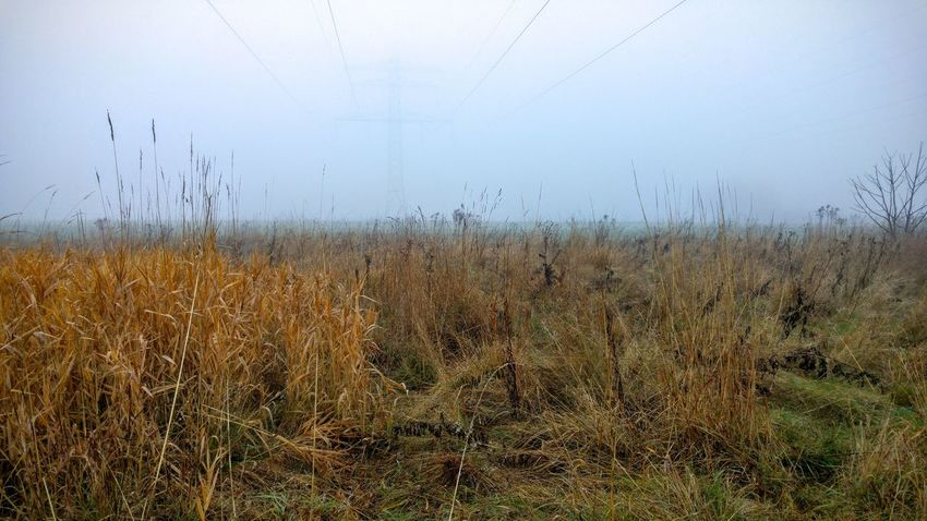 Agriculture Beauty In Nature Day Field Fog Grass Growth Landscape Nature No People Outdoors Plant Scenics Sky Tranquility